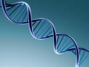 taste fat genetics